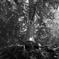 El árbol de la historia