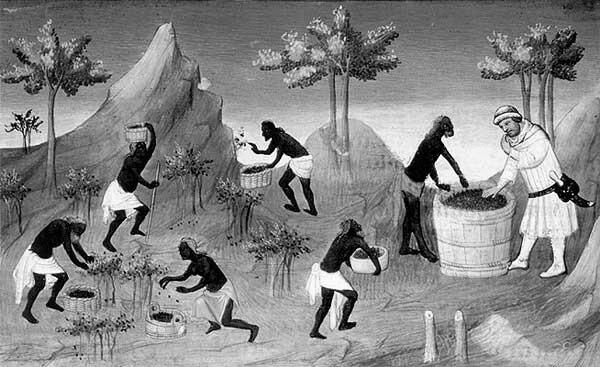 """""""La récolte du poivre à Coilun [Quilon]."""" From Le Devisement du monde ou Livre des Merveilles by Marco Polo (http://expositions.bnf.fr/marine/grand/fr_2810_084.htm)"""